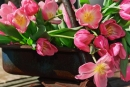 CR-629-pink-tulips-in-wagon (14K)
